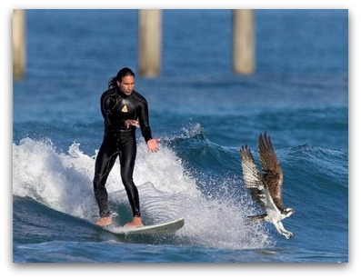 At the time of this photo, Paul Gallegos and the osprey shown were good friends.