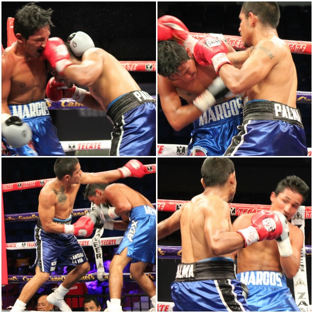 """If you left the building early, you missed the """"Bout of the Night"""". The match between Margas Randel Mendoza (blue trunks, white trim) and the free swinging Palma (dark blue trunks, black trim) was a furious and memorable battle of stamina and courage. All photos: Jim Wyatt"""
