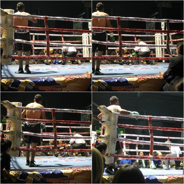 After sending Manuel Sandoval to the canvas, Alex Hernandez waits patiently to see if Adrian Diaz is able to continue by getting up before the referee completes his 10 count.